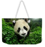 Giant Panda Ailuropoda Melanoleuca Weekender Tote Bag by Katherine Feng