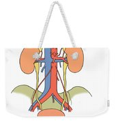 Illustration Of Urinary System Weekender Tote Bag by Science Source