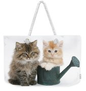 Maine Coon Kittens Weekender Tote Bag