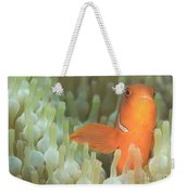 Spinecheek Anemonefish In Anemone Weekender Tote Bag