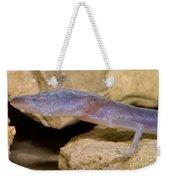 Austin Blind Salamander Weekender Tote Bag