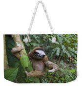Brown-throated Three-toed Sloth Weekender Tote Bag