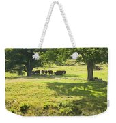 Cows Grazing On Grass In Farm Field Summer Maine Weekender Tote Bag