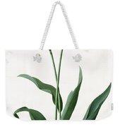 5 Tulip Tulip  Weekender Tote Bag
