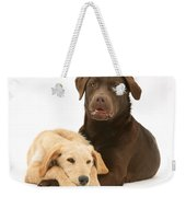 Labradoodle And Labrador Retriever Weekender Tote Bag by Jane Burton