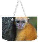 Silvered Leaf Monkey Trachypithecus Weekender Tote Bag