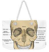 Illustration Of Anterior Skull Weekender Tote Bag by Science Source