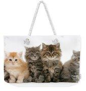 Maine Coon Kittens Weekender Tote Bag