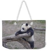 A Baby Panda Plays On A Branch Weekender Tote Bag