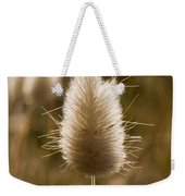 A Beautiful Seed Pod With Beautiful Sun Reflection Weekender Tote Bag