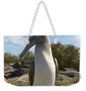 A Blue-footed Booby Of The Galapagos Weekender Tote Bag