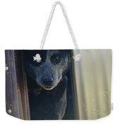A Blue Heeler Cattle Dog Peers Weekender Tote Bag