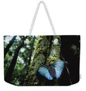 A Blue Morpho Butterfly Weekender Tote Bag