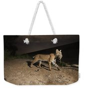 A Bobcat Crosses A Rio Grande Border Weekender Tote Bag