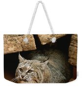 A Bobcat Pokes Out From Its Alcove Weekender Tote Bag
