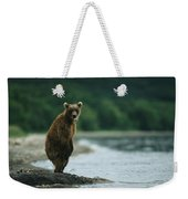 A Brown Bear Standing At Waters Edge Weekender Tote Bag
