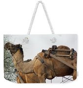 A Camel Foraging For Food In A Desert Environment Weekender Tote Bag