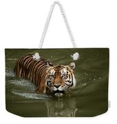 A Captive Sumatran Tiger Panthera Weekender Tote Bag