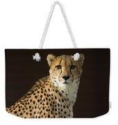A Cheetah Acinonyx Jubatus Urinates Weekender Tote Bag
