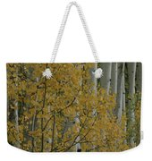 A Close View Of Quaking Aspen Trees Weekender Tote Bag