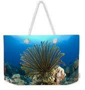 A Feather Star With Arms Extended Weekender Tote Bag