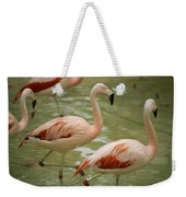 A Flock Of Chilean Flamingos Wading Weekender Tote Bag