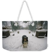 A Forlorn And Snow-dusted Sheltie Weekender Tote Bag