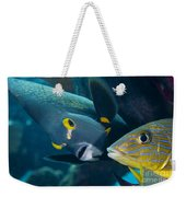 A French Angelfish Swims Up Close Weekender Tote Bag