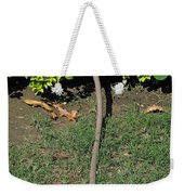 A Garden Water Pipe Emerging From Within A Hedge Weekender Tote Bag
