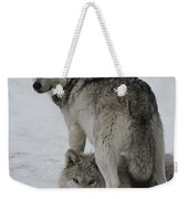 A Gray Wolf, Canis Lupus, Stands Weekender Tote Bag