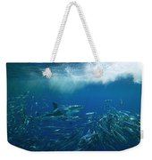 A Great White Shark Swims Close Weekender Tote Bag
