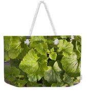 A Green Leafy Vegetable Plant After Watering In Bright Sunrise Weekender Tote Bag