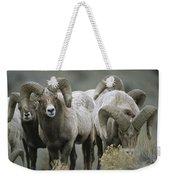 A Group Of Bighorn Sheep Rams Weekender Tote Bag