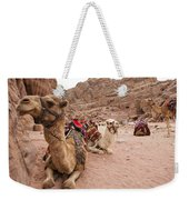 A Group Of Camels Sit Patiently Weekender Tote Bag