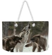 A Group Of Gray Wolves, Canis Lupus Weekender Tote Bag