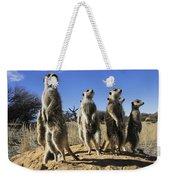 A Group Of Meerkats Standing Guard Weekender Tote Bag
