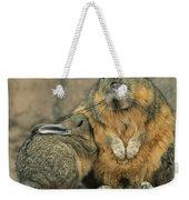 A Herbivorous Viscacha Nurses Her Baby Weekender Tote Bag
