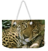 A Jaguar Rests On The Jungle Floor Weekender Tote Bag