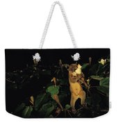 A Kinkajou Drinks Deeply Of Balsa Weekender Tote Bag