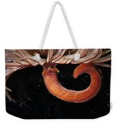 A Large Feather Duster Worm Weekender Tote Bag