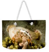 A Large Hermit Crab With Sea Anemones Weekender Tote Bag