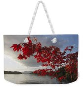 A Maple Tree In Fall Foliage Frames Weekender Tote Bag