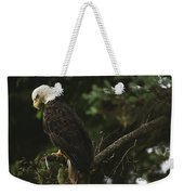 A Mature Bald Eagle Is Perched Atop Weekender Tote Bag