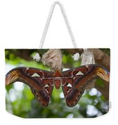A Moth Clings To Its Cocoon Immediately Weekender Tote Bag