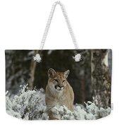 A Mountain Lion, Felis Concolor Weekender Tote Bag