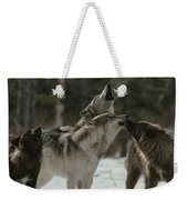 A Pack Of Gray Wolves, Canis Lupus Weekender Tote Bag