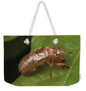A Periodical Cicada Exoskeleton Weekender Tote Bag