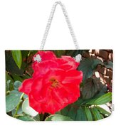 A Pink Rose Being Backlight With The Petals Looking Translucent Weekender Tote Bag