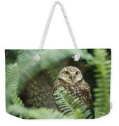 A Portrait Of A Captive Burrowing Owl Weekender Tote Bag