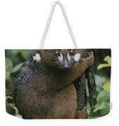 A Red-bellied Lemur Clings To A Tree Weekender Tote Bag